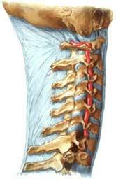 боли в шее, продуло шею, переохлаждение шеи, стреляет в шею, шейная боль, дискомфорт в шее, шейный остеохондроз, шейный остехандроз причины, лечение шеи, лечение шейного отдела, лечение шейного остеохондроза, лечение боли в шее